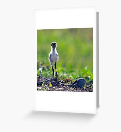 The Chick Greeting Card