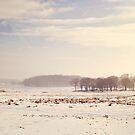 Snowy valley by Lyn  Randle