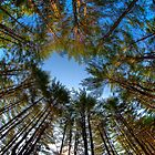 Looking up at Peoples State Forest by Timothy Borkowski