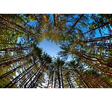 Looking up at Peoples State Forest Photographic Print