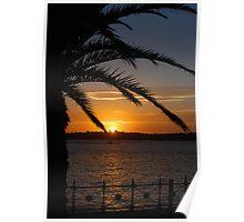 Sydney summer sunset Poster