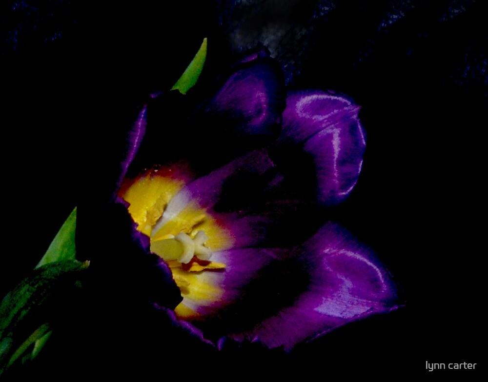 Dark Beauty by lynn carter