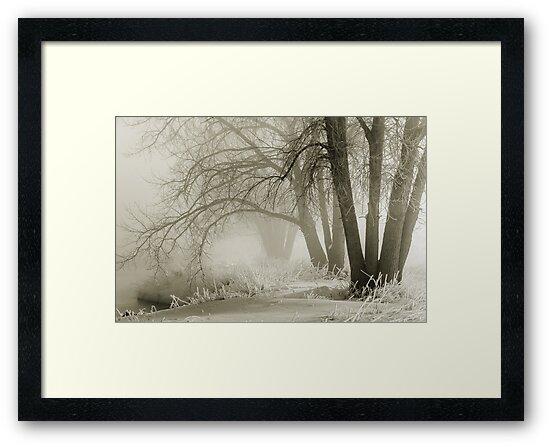 Winter Silence by nikongreg