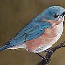 Eastern Bluebird by Charlotte Yealey