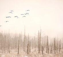 Fog and Dust by Gisele Bedard