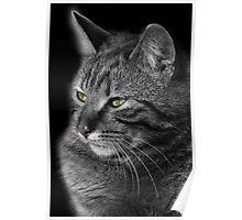 Green Eyed Tabby Cat Poster