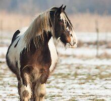 Farm horse by LaurentS