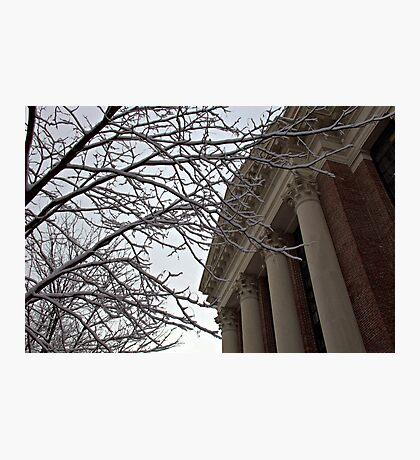 Harvard Yard Photographic Print