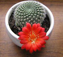 Cactus flowe by Roksana