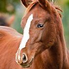 Foal by LaurentS