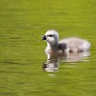 Gosling drinking by LaurentS