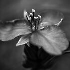 Flower Study in Black and White by William Martin