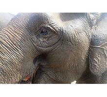 The Smiling Elephant Photographic Print