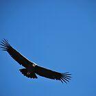 Condor by DAJPowell