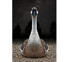 The Gander and a Starry Night Photographic Print