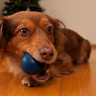 Dog and the blue ball by Csar Torres