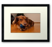 Dog and the blue ball Framed Print