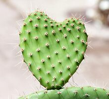 Prickly Heart by Gary Chapple