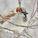 Sparrow On A Winter's Day by lorilee
