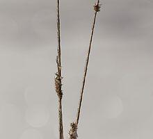 Frozen Twigs by Kathi Arnell