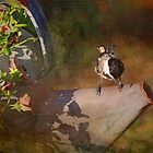 Chickadee on a flower pot 1 by portblessed