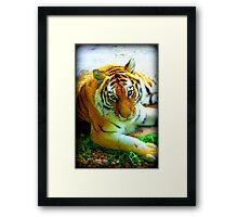 Exotic Tiger Framed Print