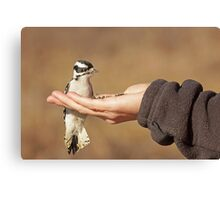 The Brave Little Woodpecker ~ Canvas Print