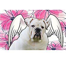 White Winged English Bulldog Photographic Print