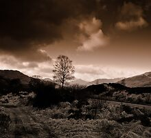 Trossachs Tree by Andy Donne