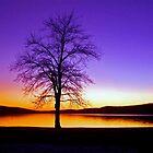 Purple Sunset by patti4glory