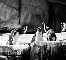 Penguins by gentlemanlout