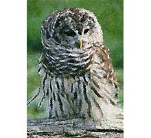 Barred Owl Print, Poster & Card Photographic Print