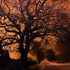 Long exposure oak tree  by simon17