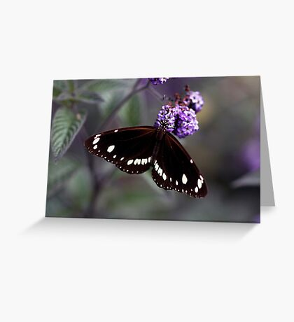 Hunter Valley Butterfly Greeting Card