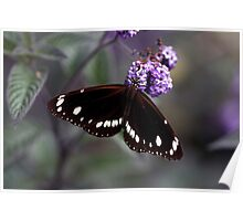 Hunter Valley Butterfly Poster
