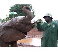 Elephant feeding, Kenya Photographic Print