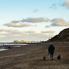 Walk dogs along the beach in the winter by simon17