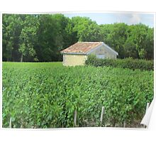 Vineyard at Bordeaux, France Poster