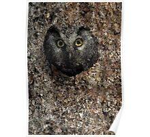 Boreal Owl Bird Poster Print & Card Poster