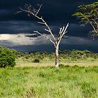 The Serengeti by JKutchera