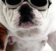 Bulldog in Sunglasses Print Sticker