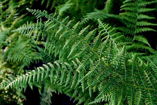 Fern-tastic! by Gene Walls