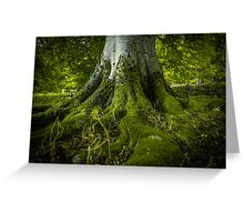 Tree Roots In A Forest Greeting Card