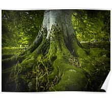 Tree Roots In A Forest Poster