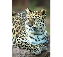 Jaguar Resting in the Sun Photographic Print