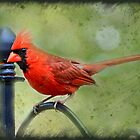 Male Cardinal with texture by portblessed