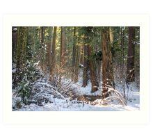 Calavera Redwoods Art Print