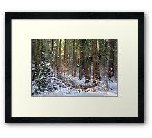 Calavera Redwoods Framed Print
