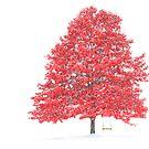 The Oak Tree by BigD