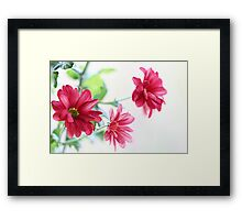 Mums in a window Framed Print